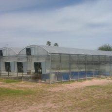 greenhouse 4